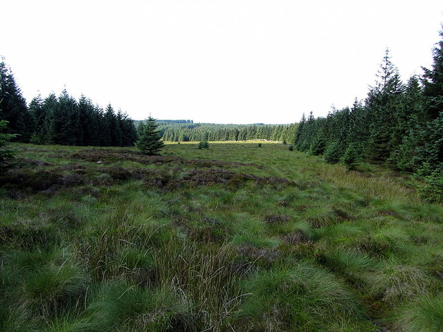 The Border towards Buckside Knowe