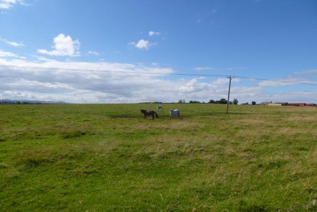 Horses off the B1340