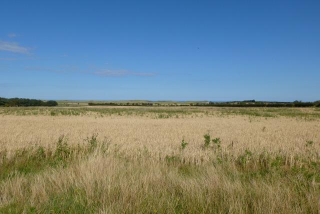 Farmland near Brunton Bridge