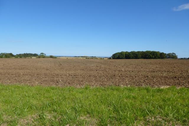 Towards Whinny Plantation