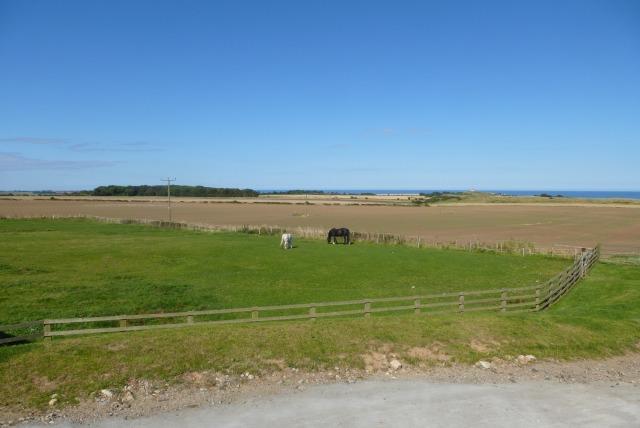 Horses at North Farm