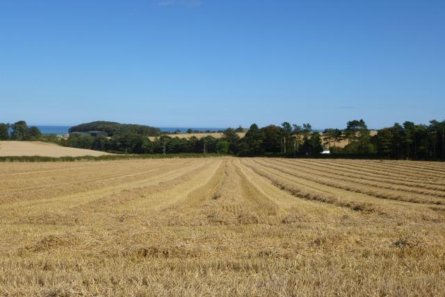 Stubble field near Embleton