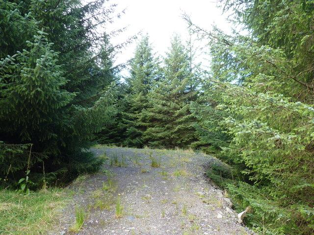 Fernaig Wood