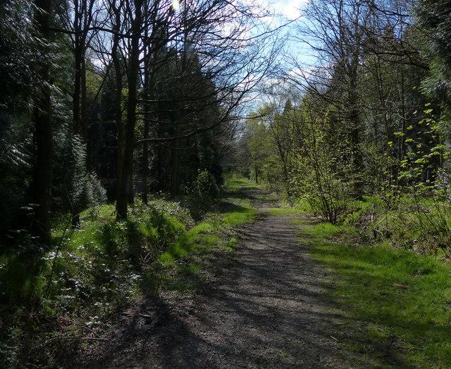 Paths through Martinshaw Wood