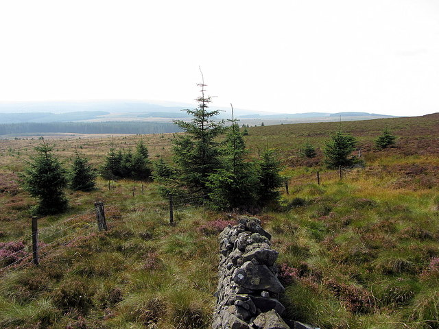 Border on Larriston Fells