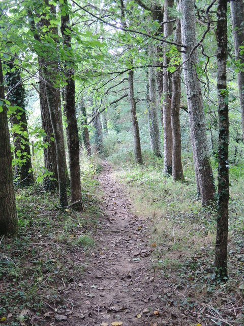 Bovey Tracey: woodland path