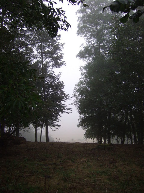 Burton Park in the mist