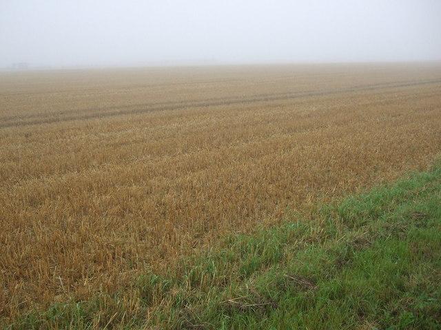 Stubble field, Cliff Farm