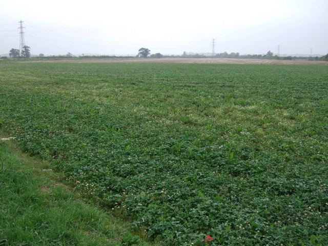 Crop field, North Carlton
