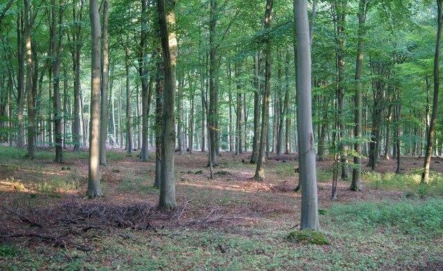 Evening light - Blackwood Forest