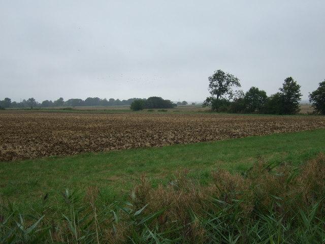 Farmland off the A1500
