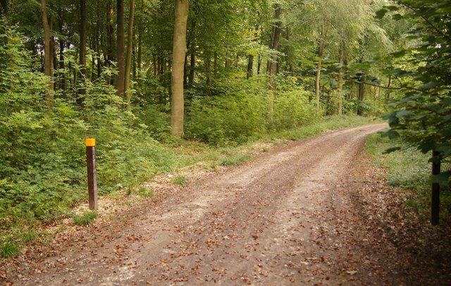 The 'Yellow Trail' - Blackwood Forest
