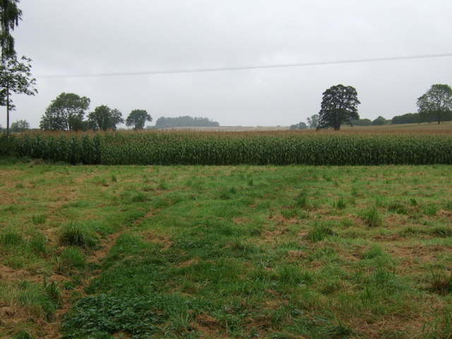 Crop field, Scampton