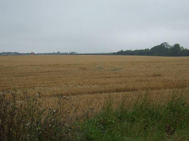 Stubble field, Cliffe Farm
