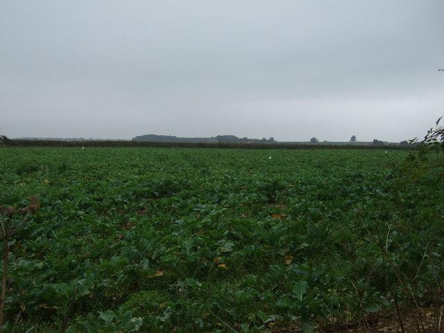 Crop field off Heath Lane