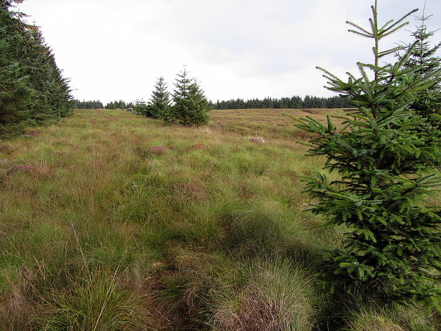 Edge of forest at Foulmire Heights