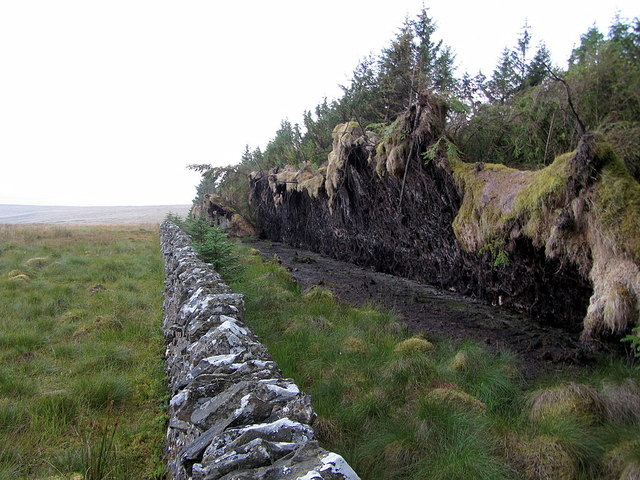 Wall of fallen trees at Thorlieshope Heights