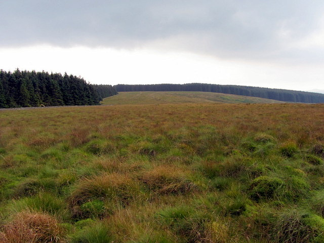 Rough moorland at Thorlieshope Heights