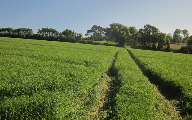 Path to Wivelscombe