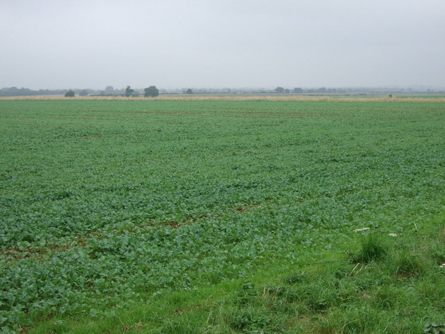 Crop field off Heath Road