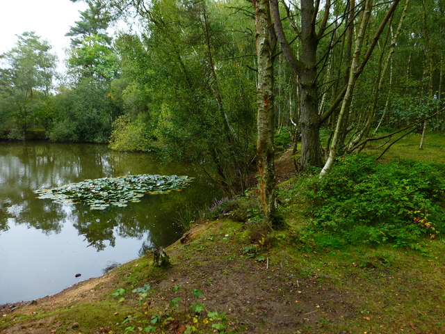 Water, woodland and water lilies