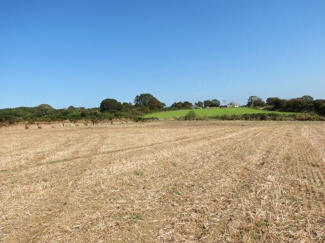 Cae llafur wedi ei gynaeafu / Harvested corn field