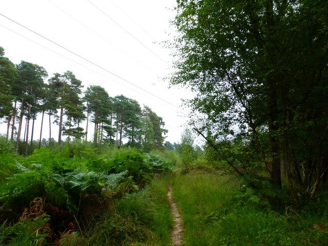 Bridleway passes under power line by Cudbury Clump