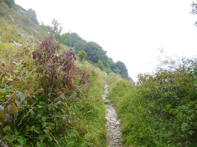 Grove, path
