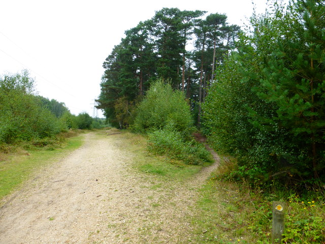 Footpath and bridleway junction at Cudbury Clump
