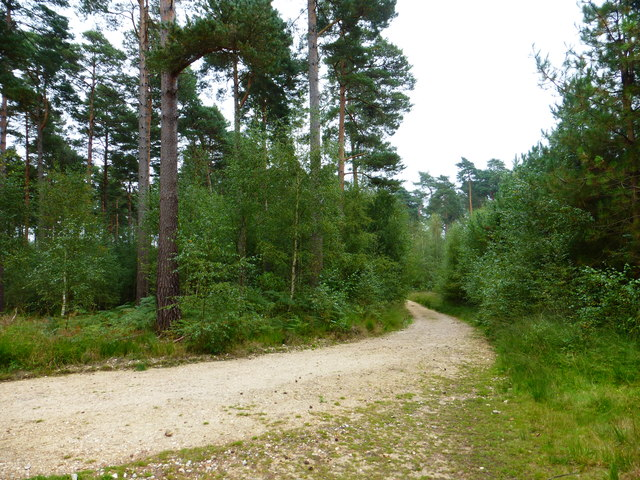 Junction of track and bridleway in Bramshill Forest