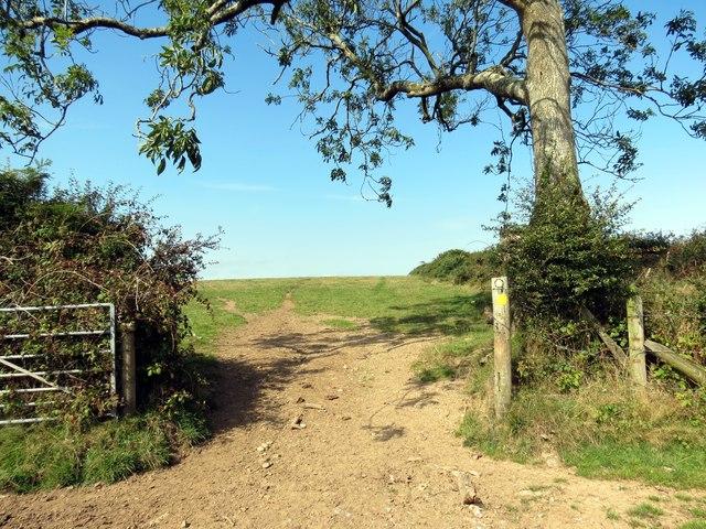 Llwybr Parc y Delyn Path