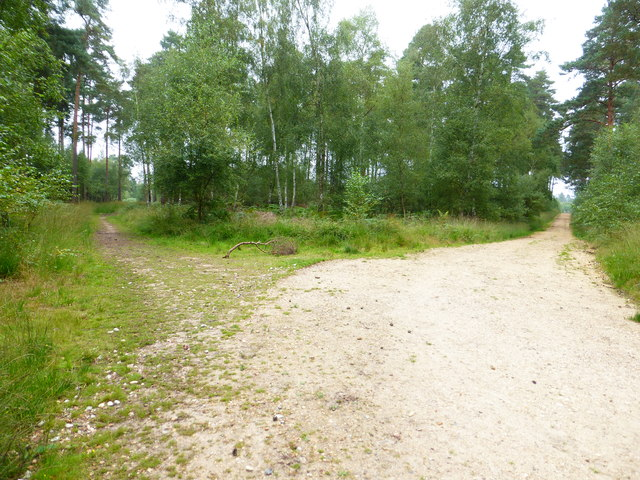 Junction of track and bridleway in Bramshill Forest (2)