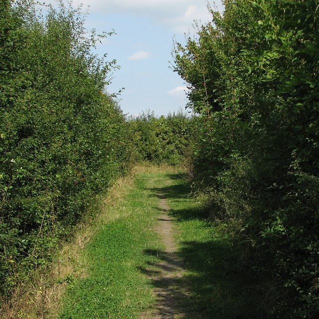 Haslingfield: a bend in the path