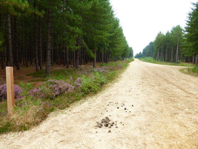 Looking eastwards along unnamed track through Warren Heath