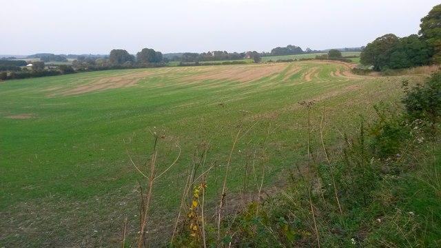 Large field at Borough Farm