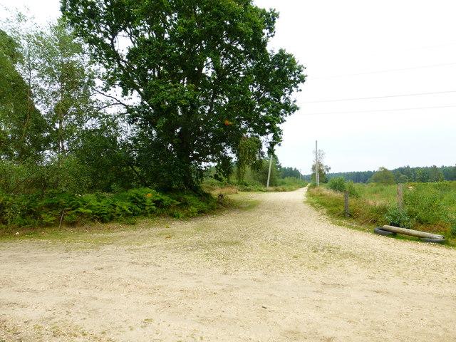 Looking along track on Warren Heath
