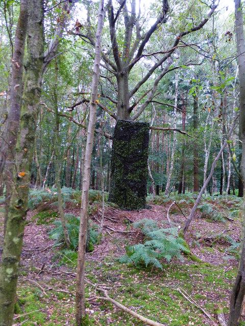 Hide in woods near Bramshill House