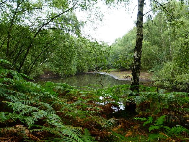 Small lake near playing field at Bramshill Park