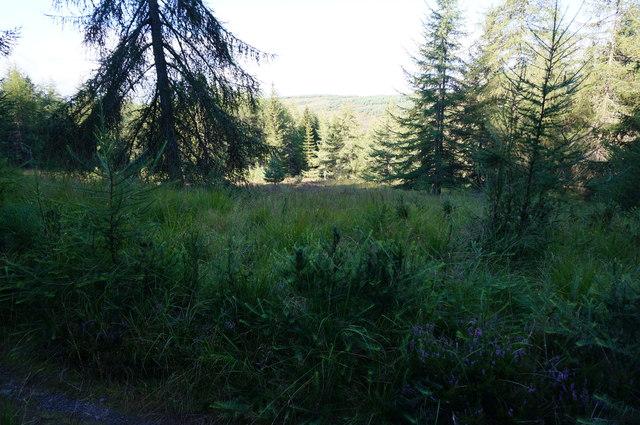 View in Glen Banvie Wood