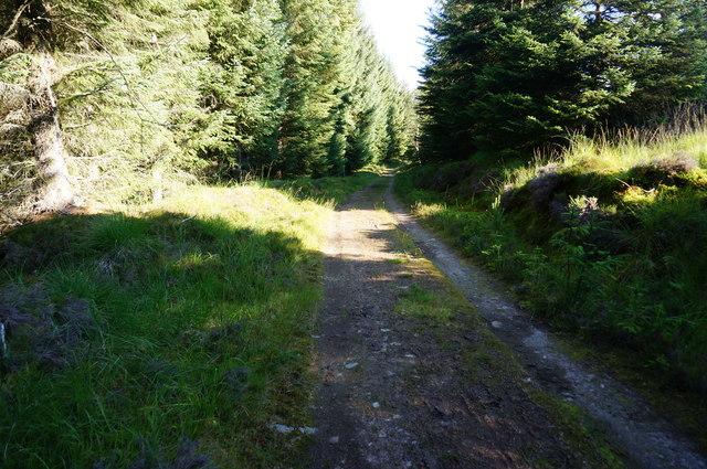 Forestry track, Glen Banvie Wood