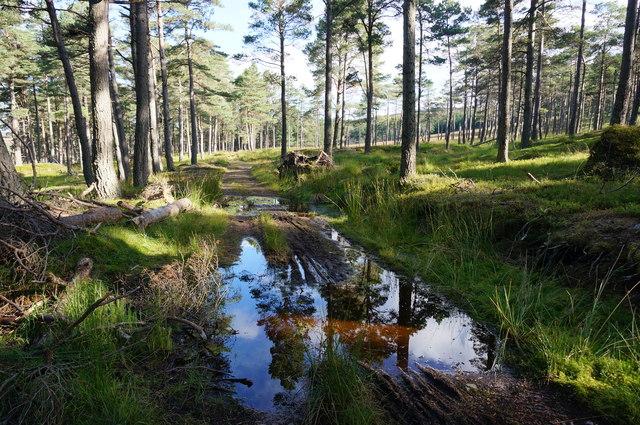 Muddy track, Glen Banvie Wood