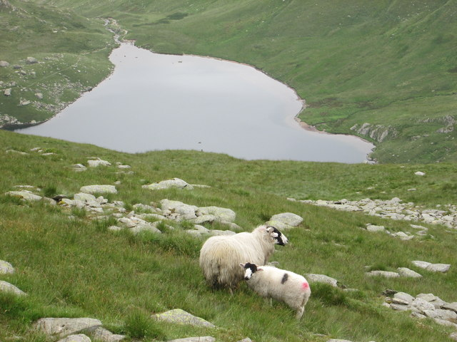 Sheep in the foreground – looking down on Small Water