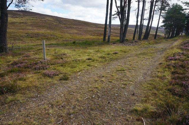 Track junction, edge of Glen Banvie Wood
