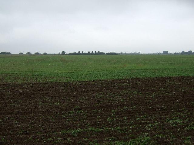 Farmland, Scothern Grange