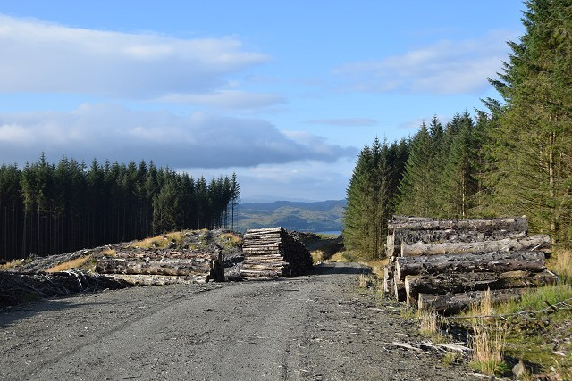 Felling road in Inverliever Forest