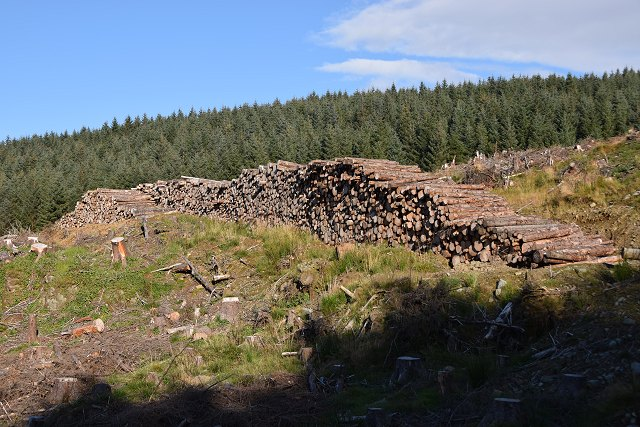 Stacked logs in Inverliever Forest