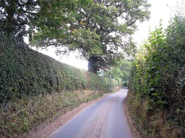 Narrow Lane near Hill Somersal