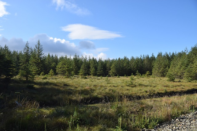 Clearing in Inverliever Forest