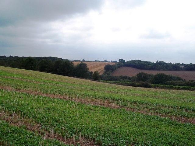 View Towards Sudbury Coppice