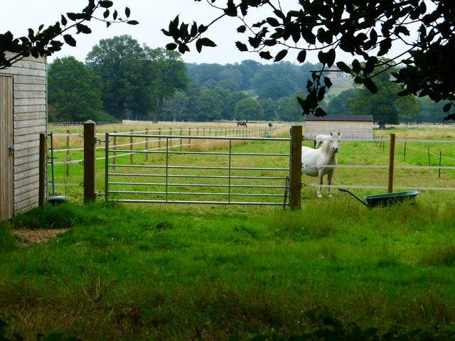 Ponies in paddocks
